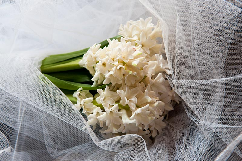 Wedding in Chrysopigi Sifnos